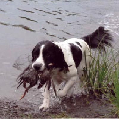 Springer Finish Water Retrieve